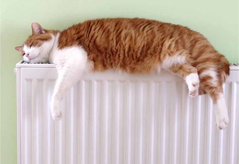 cubreradiadores gato
