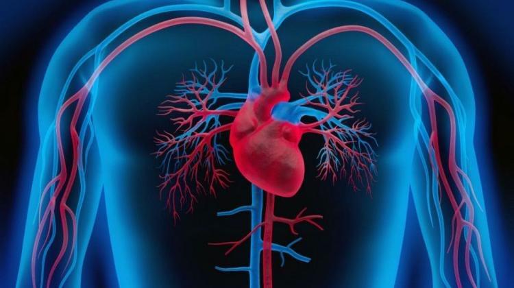 hipertension corazon cuerpo