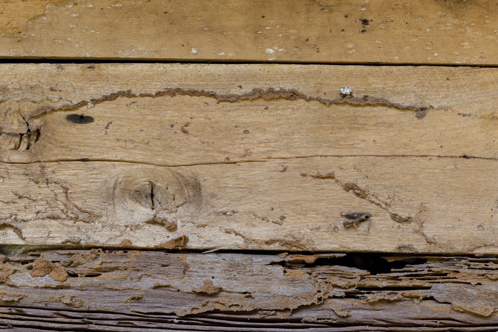 hongos madera humedad edificio
