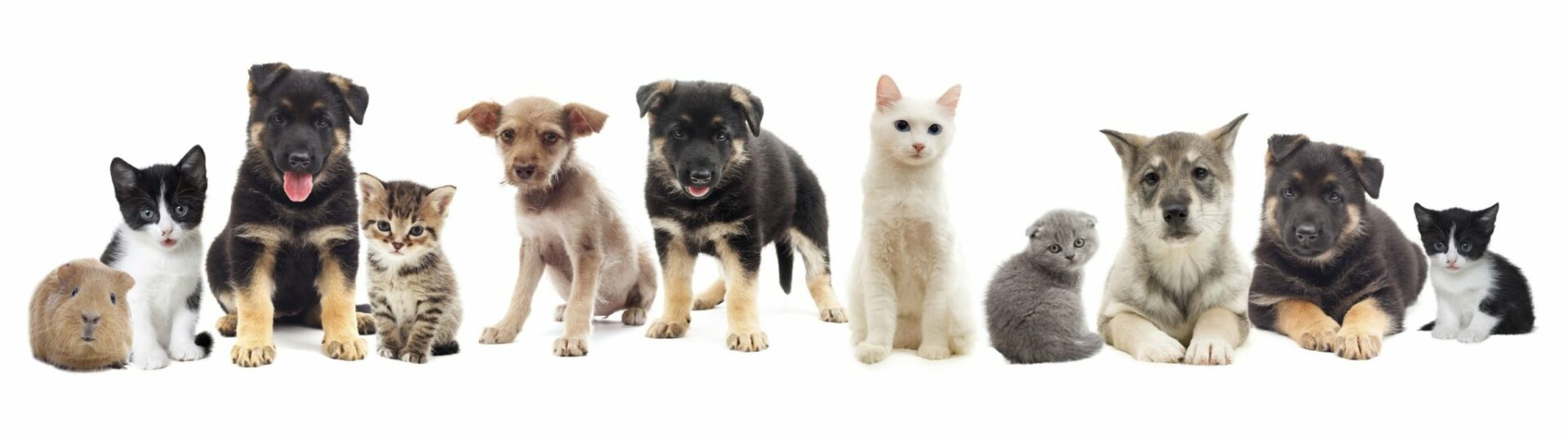 purificador de aire alegias mascotas