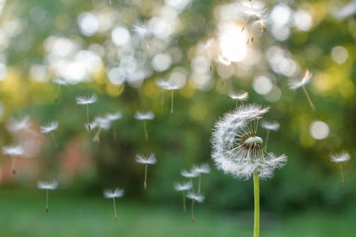 airalia humidificador sinusitis alergias