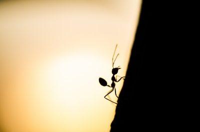 Foto de una hormiga al atardecer