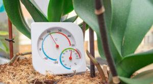 humidificador para plantas
