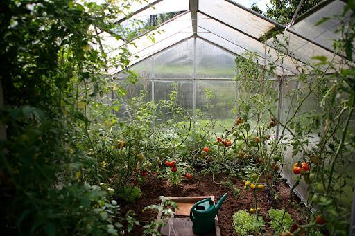 crear invernadero casero