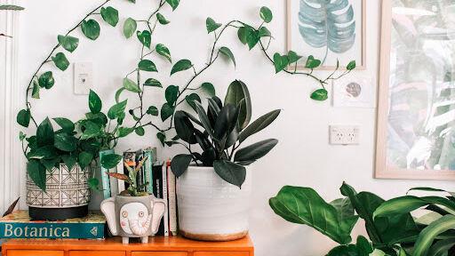humidificador para plantas de interior