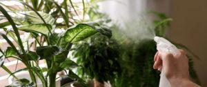 spray para plantas